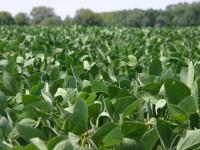 Grassley speaks to American Soybean Association